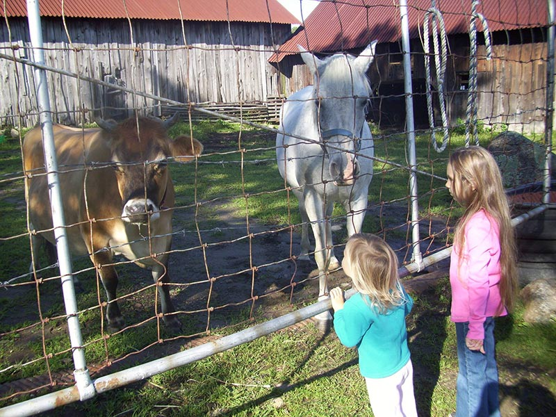 2 children visiting a horse and cow