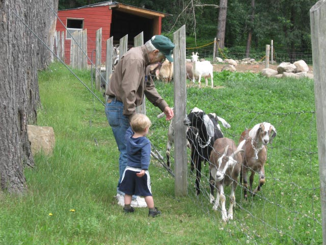 Grandfather and young child visiting animals