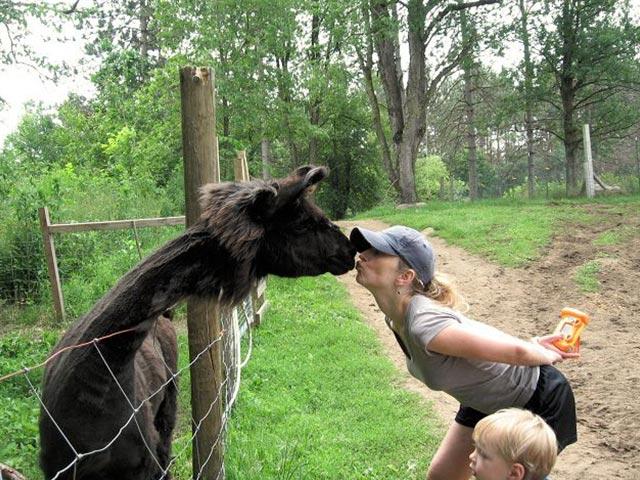 Women giving a llama a smooch