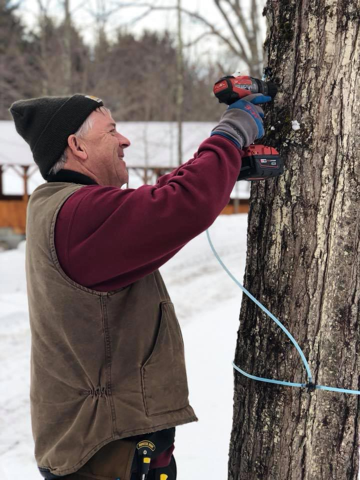 Farmer using a drill to tap maple tree