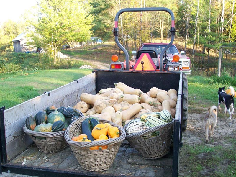 trailer full of fall squash after harvest